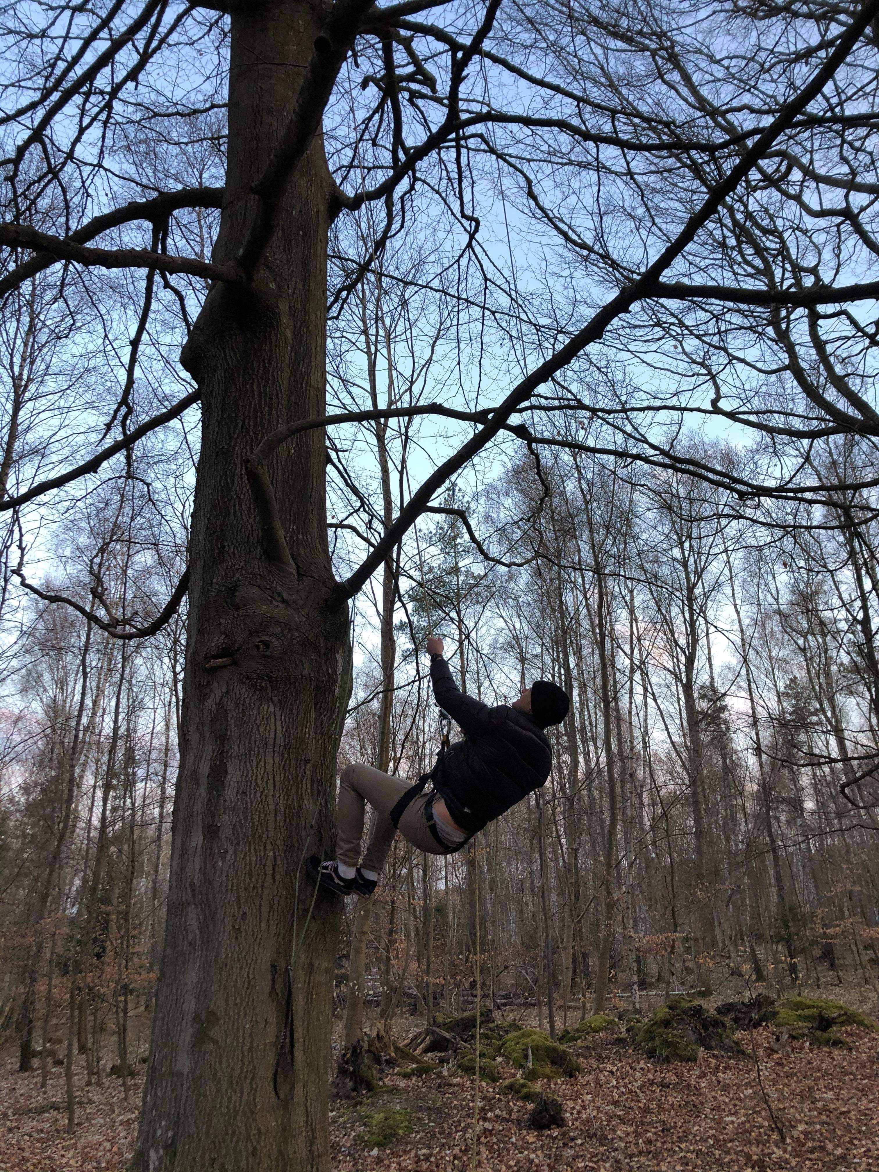 Wait, lets go up in a tree. Here is niels - he knows